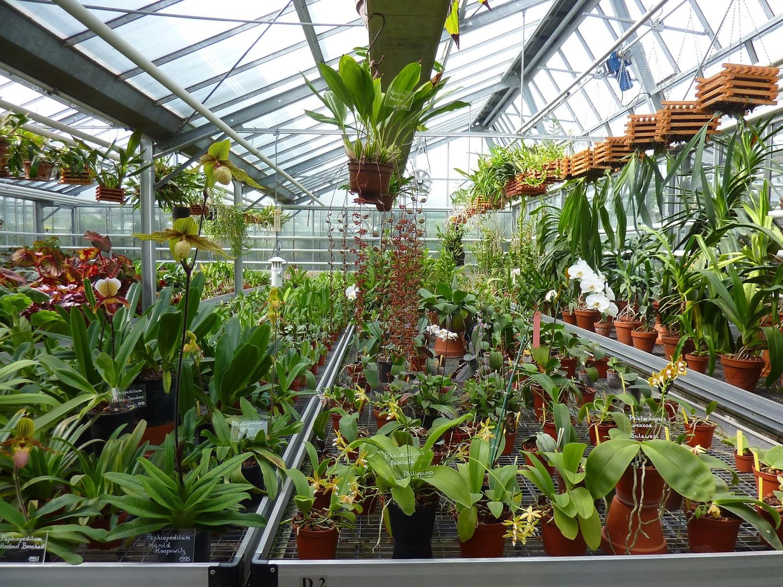 Invernaderos de jardin baratos dise os arquitect nicos - Jardines economicos ...