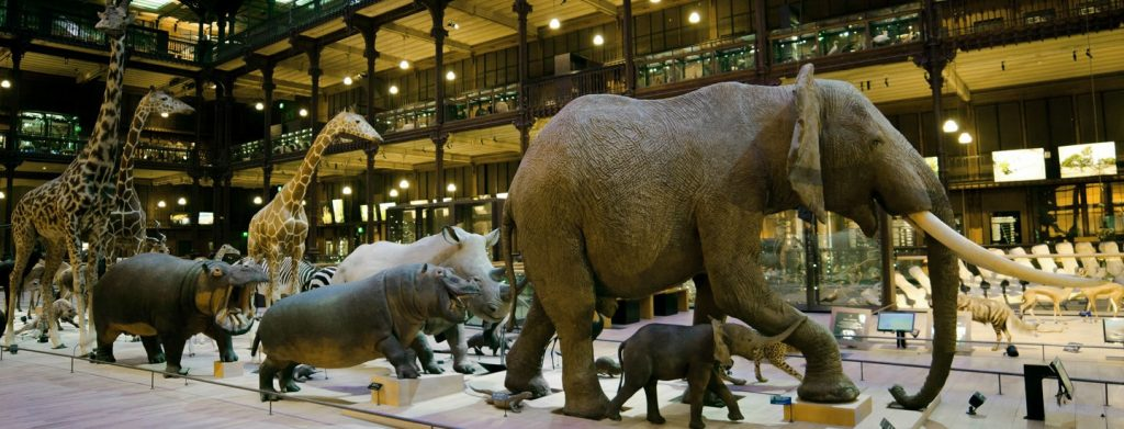 Museo de historia naturalo,