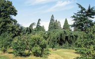 Arboretum de la escuela du Breuil